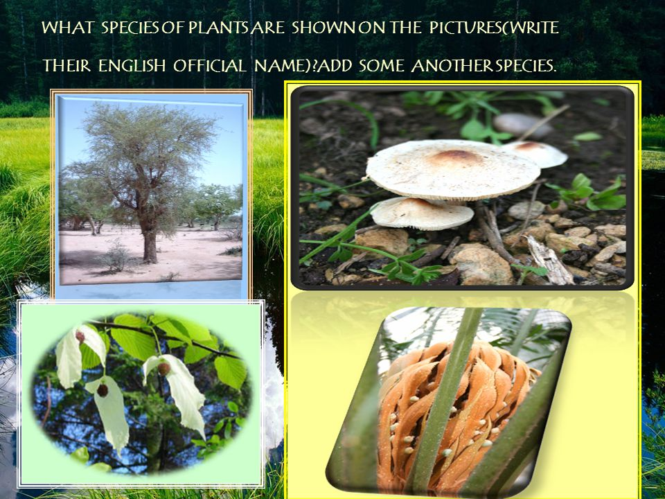 WHAT SPECIES OF PLANTS ARE SHOWN ON THE PICTURES(WRITE THEIR ENGLISH OFFICIAL NAME) ADD SOME ANOTHER SPECIES.