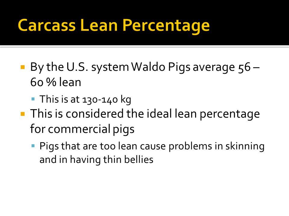 Carcass Lean Percentage