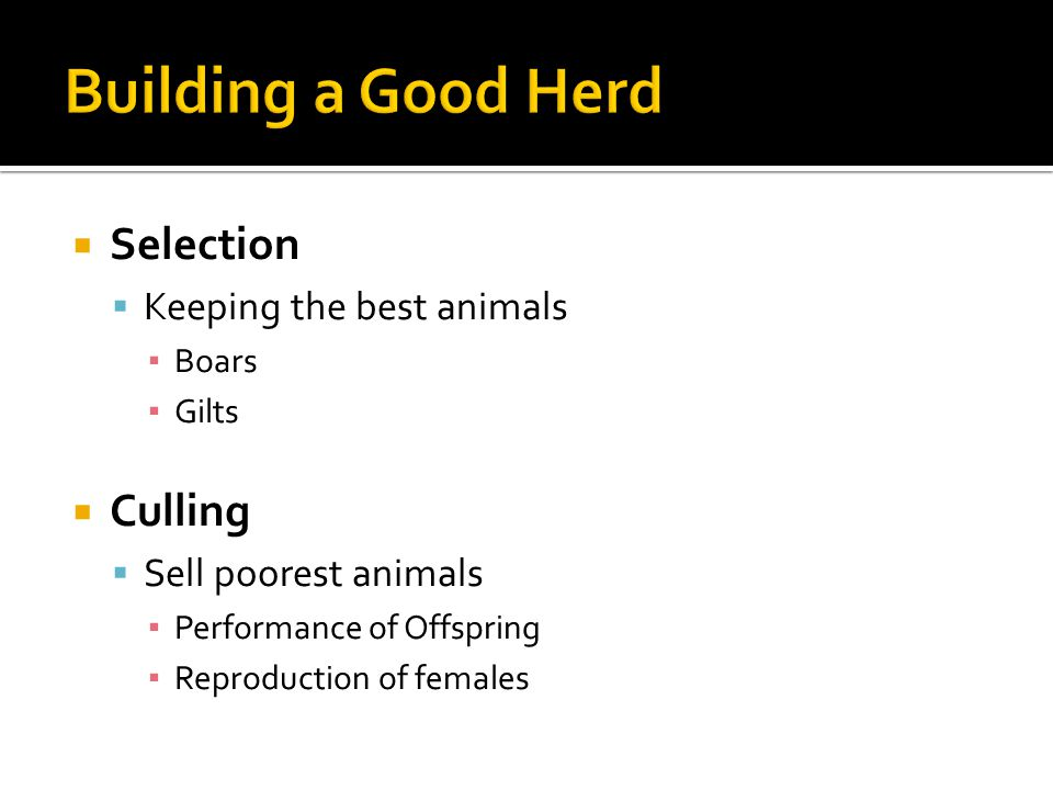 Building a Good Herd Selection Culling Keeping the best animals