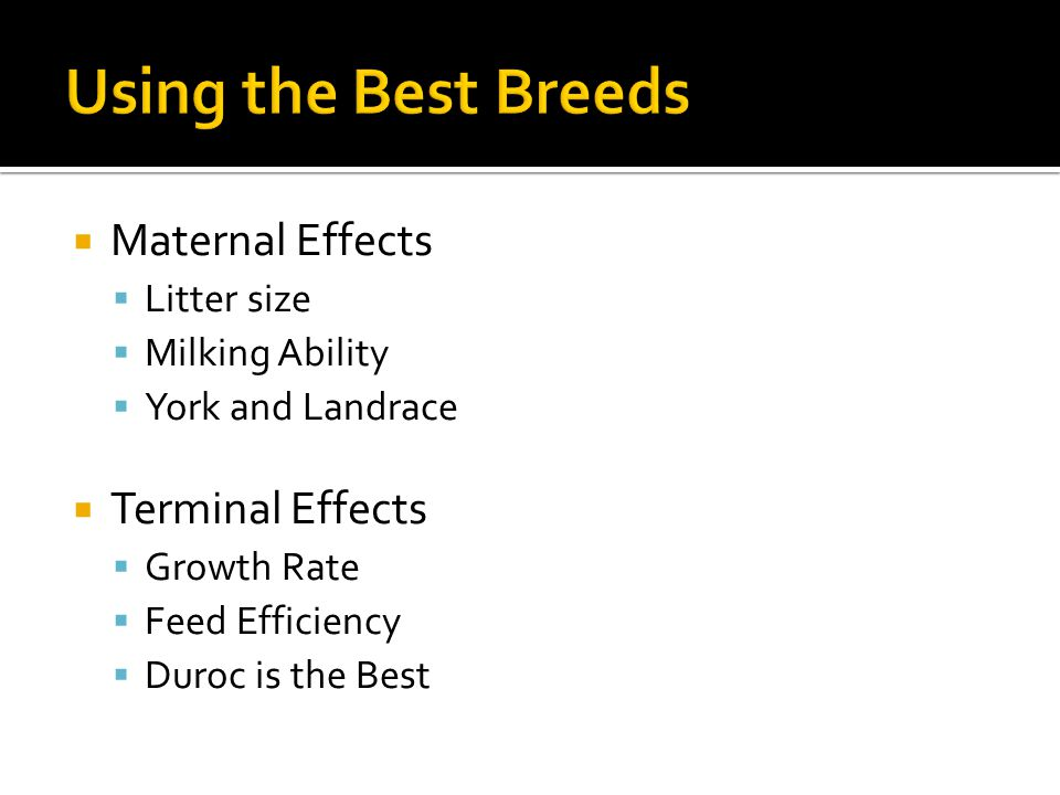 Using the Best Breeds Maternal Effects Terminal Effects Litter size
