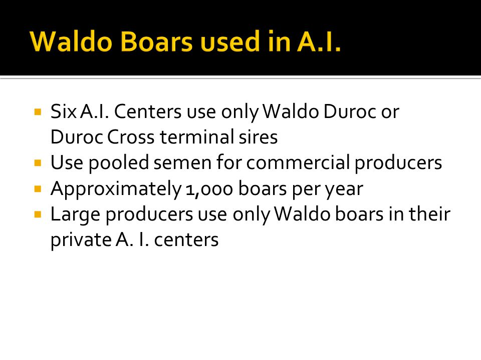 Waldo Boars used in A.I. Six A.I. Centers use only Waldo Duroc or Duroc Cross terminal sires. Use pooled semen for commercial producers.