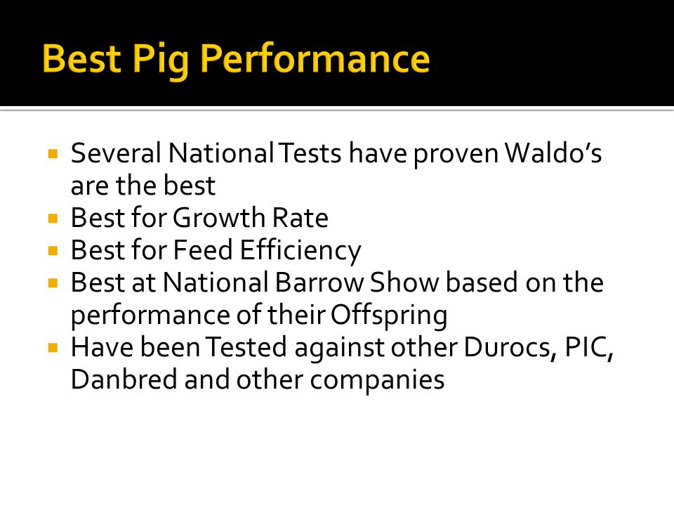 Best Pig Performance Several National Tests have proven Waldo's are the best. Best for Growth Rate.