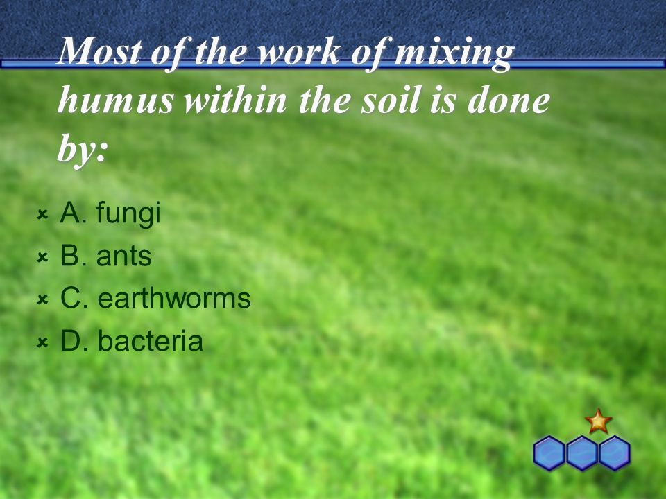 Most of the work of mixing humus within the soil is done by: