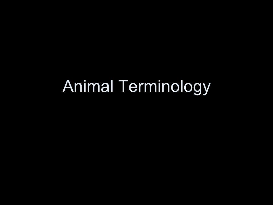 Animal Terminology