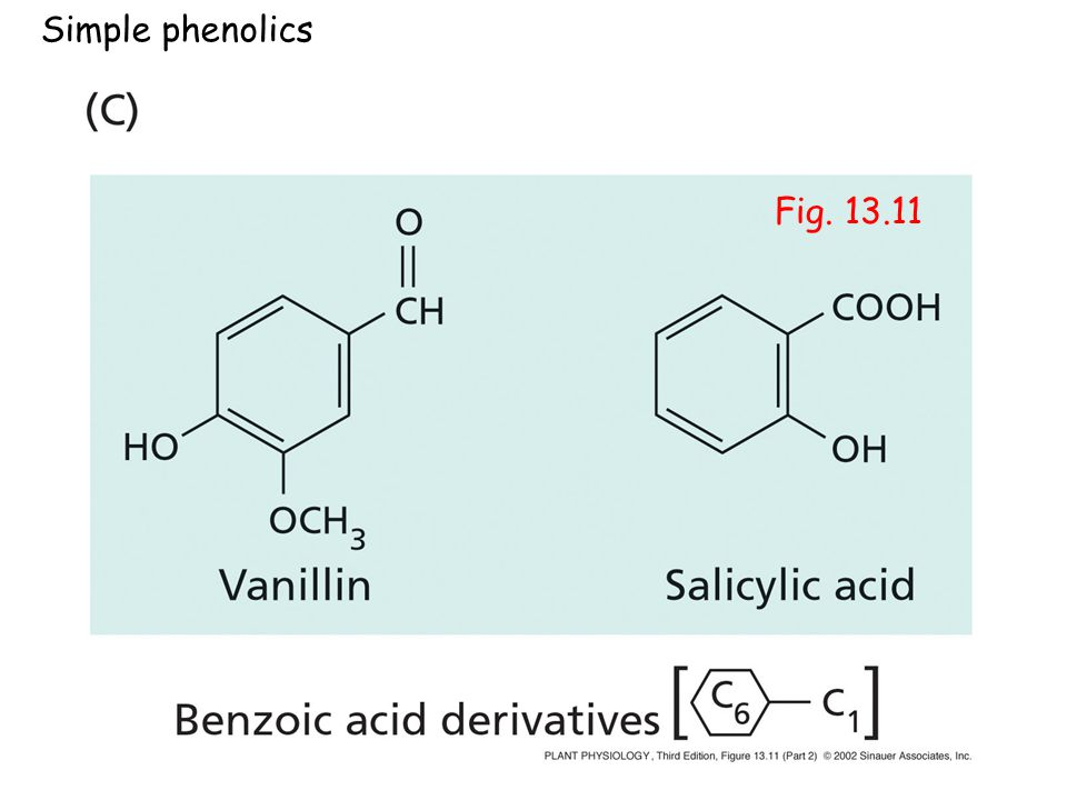 Simple phenolics Fig PP13112.jpg
