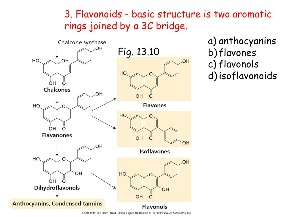 3. Flavonoids - basic structure is two aromatic