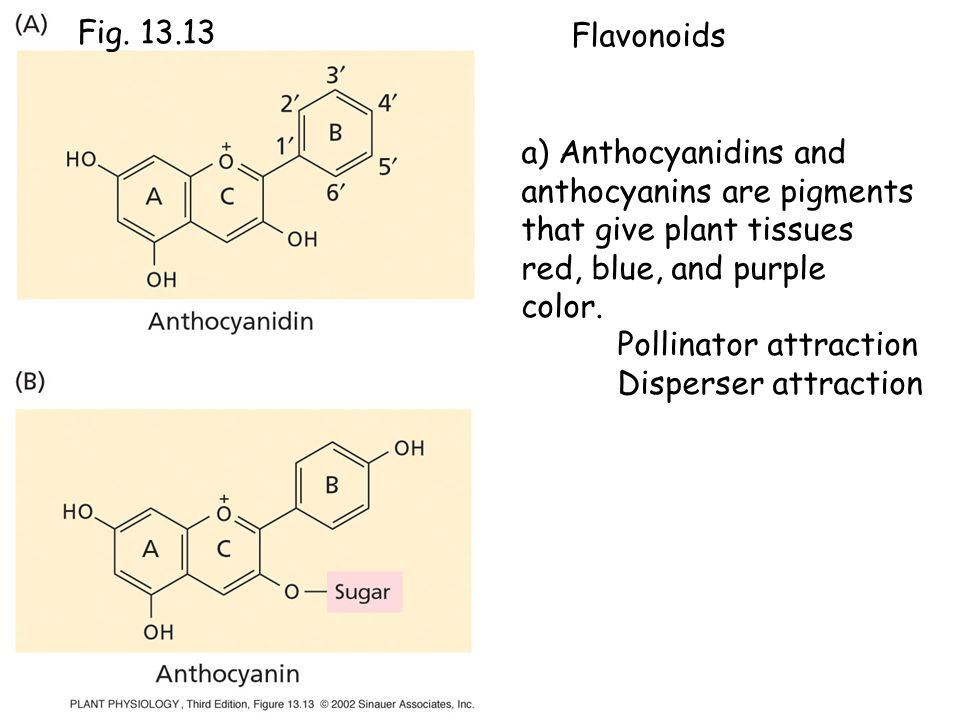 anthocyanins are pigments that give plant tissues