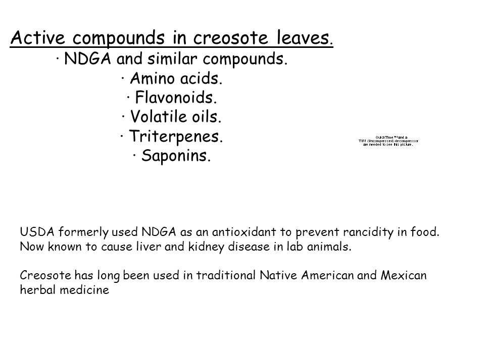 Active compounds in creosote leaves.