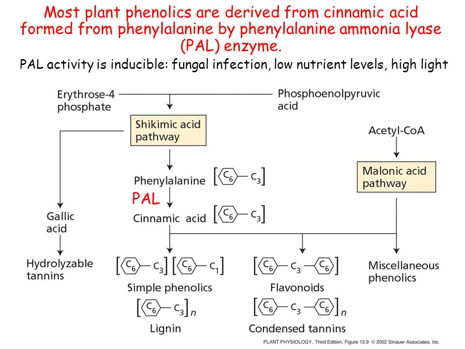 Most plant phenolics are derived from cinnamic acid