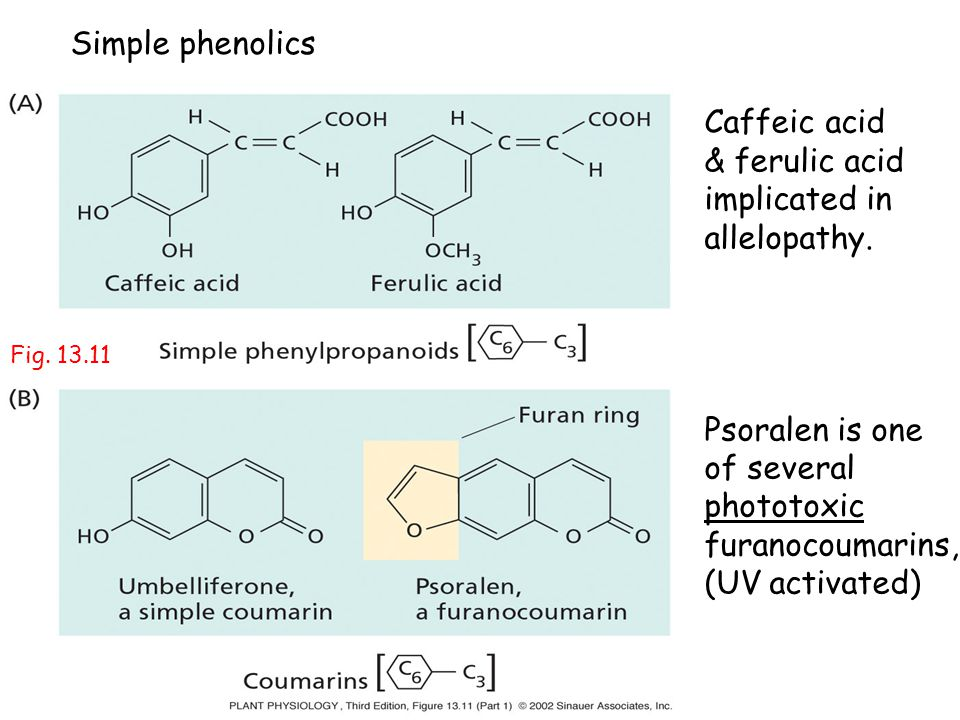 Simple phenolics Caffeic acid & ferulic acid implicated in