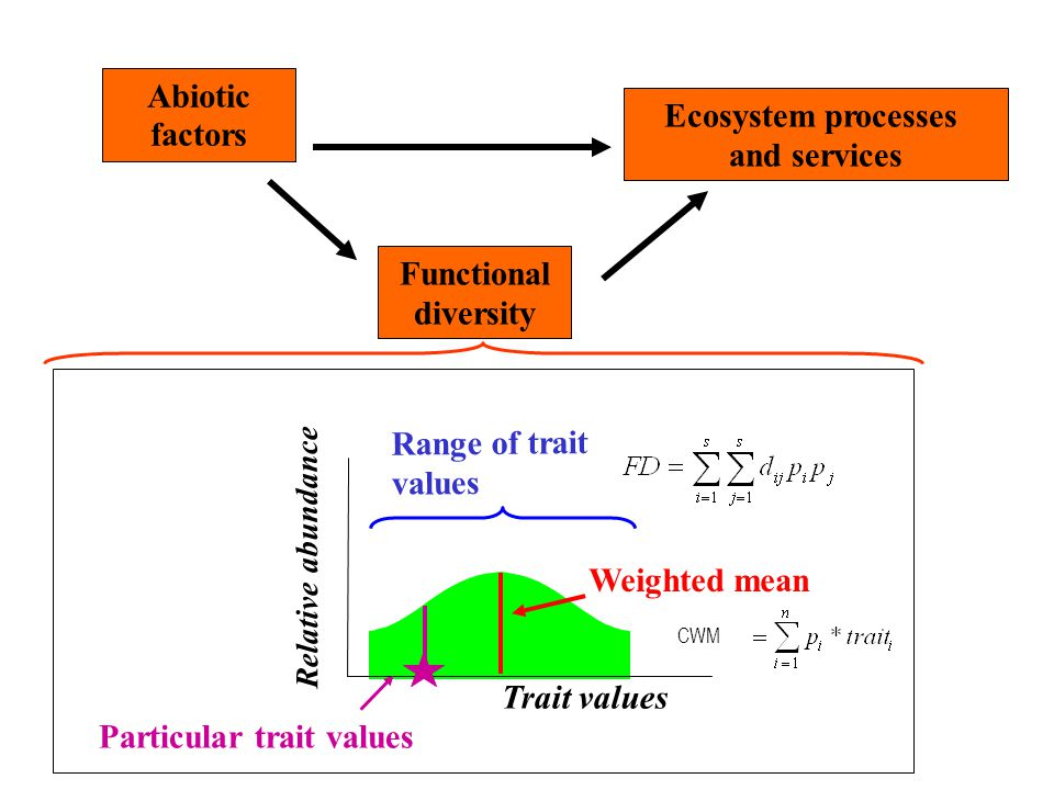 Abiotic factors Ecosystem processes and services Functional diversity