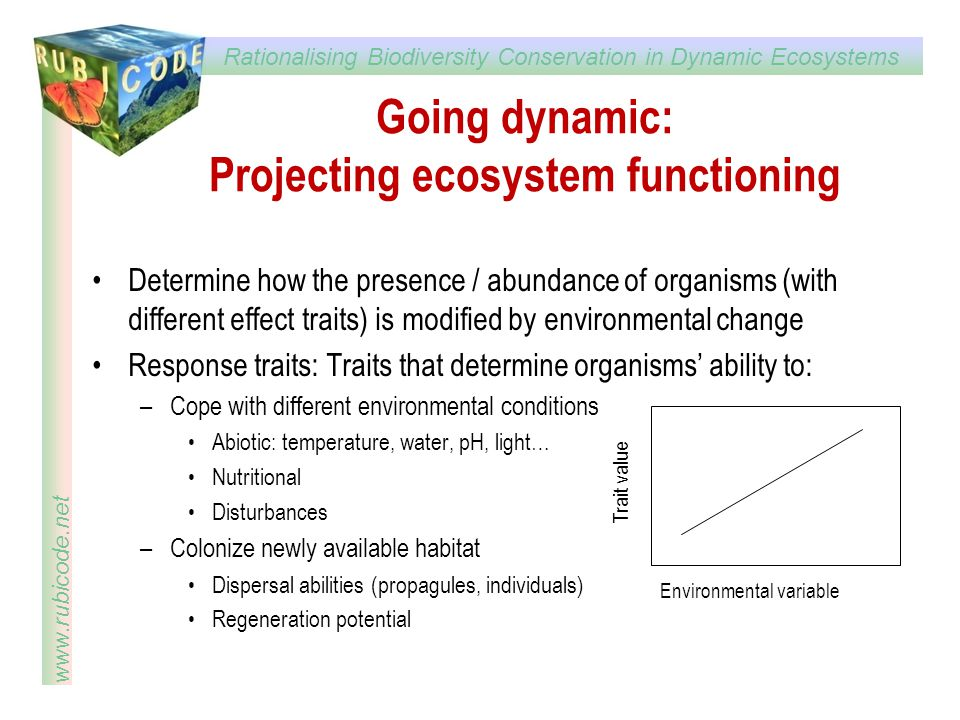 Going dynamic: Projecting ecosystem functioning
