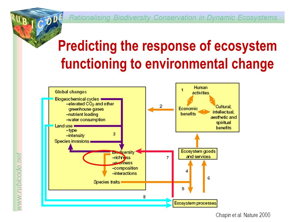 Predicting the response of ecosystem functioning to environmental change