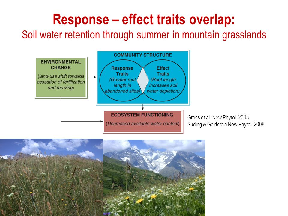 Response – effect traits overlap: Soil water retention through summer in mountain grasslands