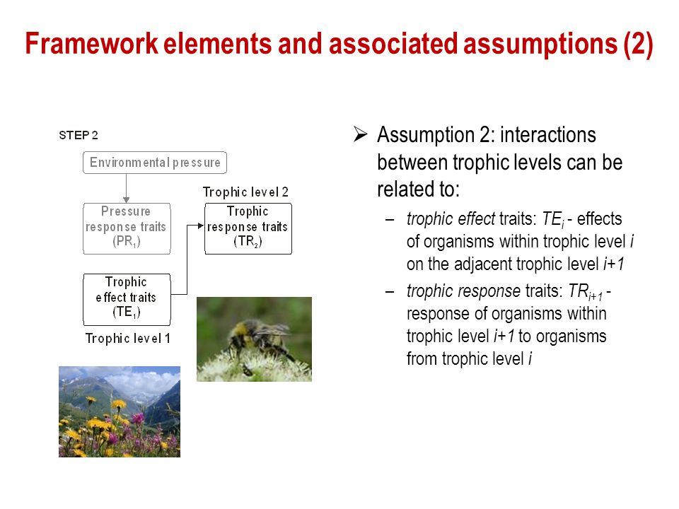Framework elements and associated assumptions (2)