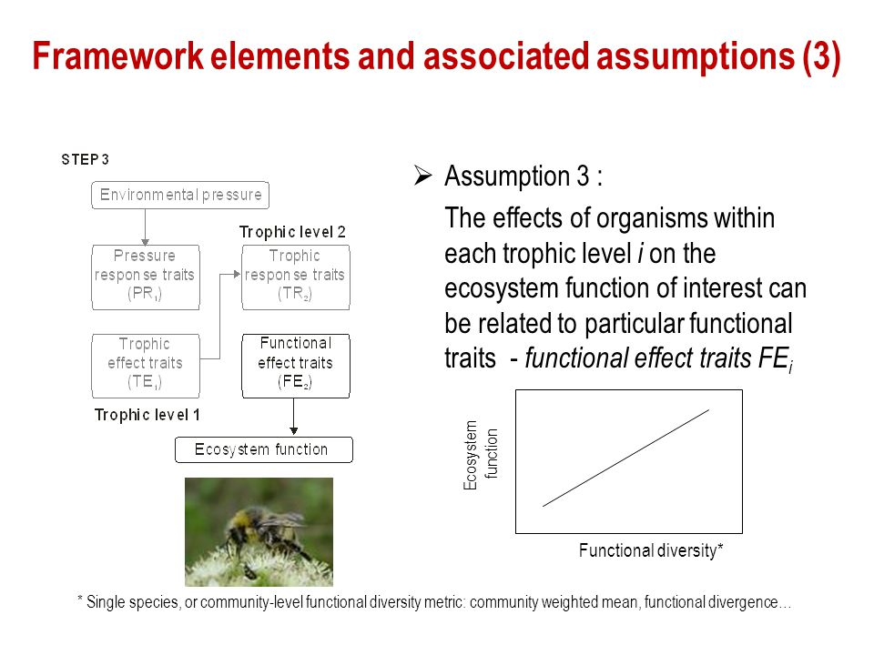 Framework elements and associated assumptions (3)