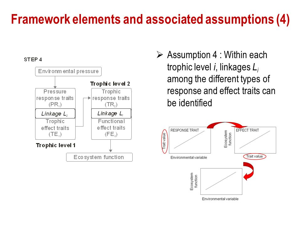 Framework elements and associated assumptions (4)
