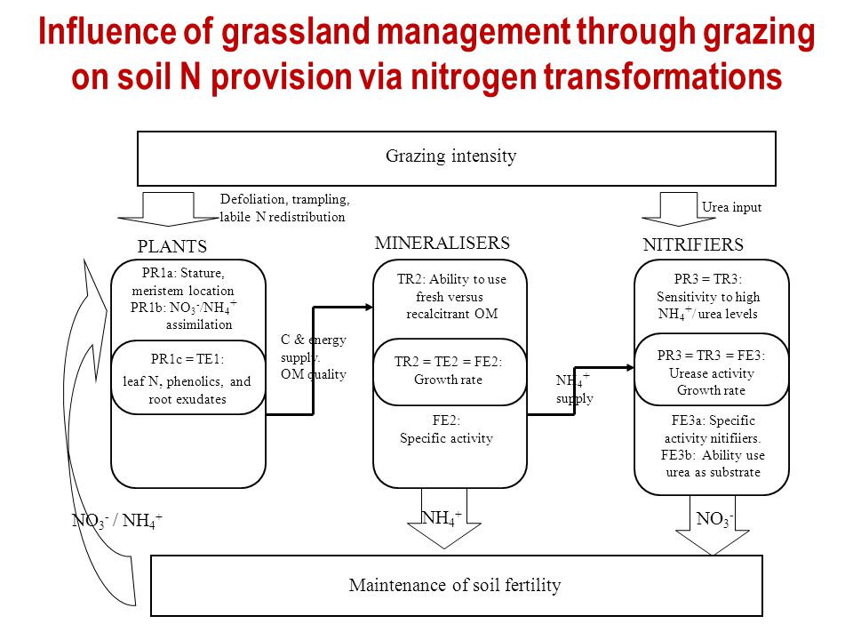 Influence of grassland management through grazing