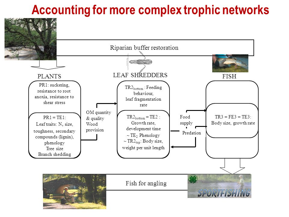 Accounting for more complex trophic networks