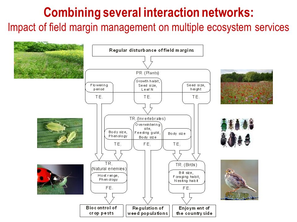 Combining several interaction networks: Impact of field margin management on multiple ecosystem services