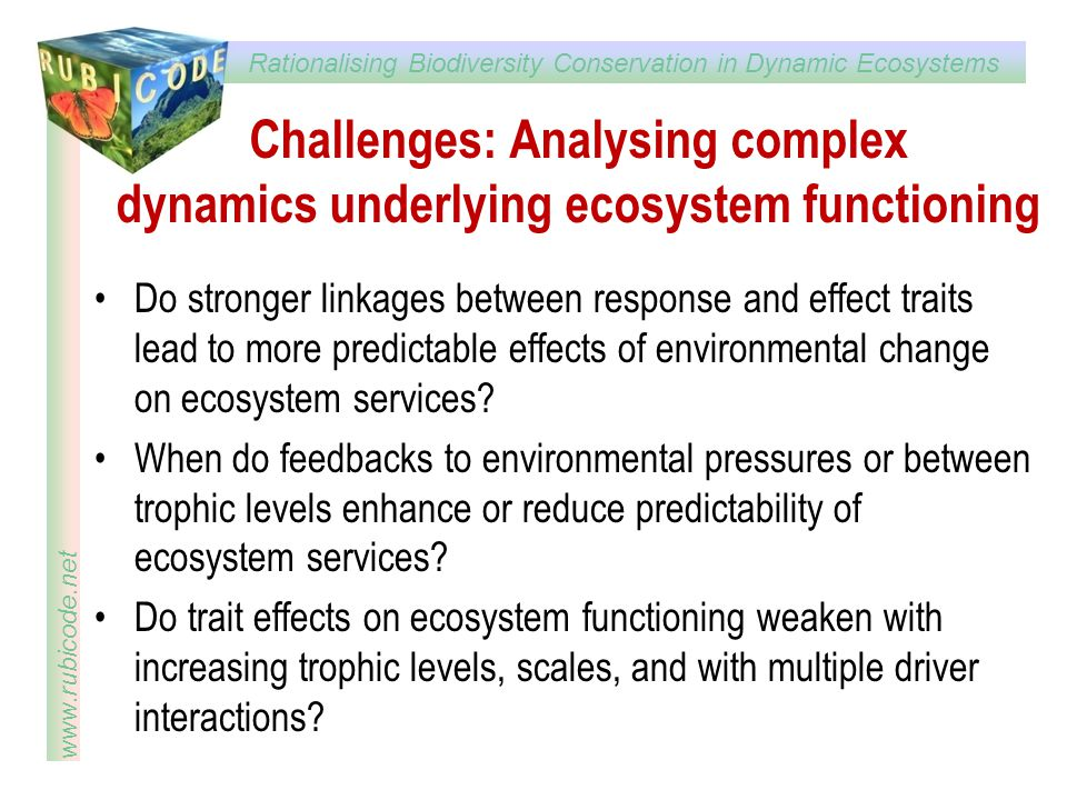Challenges: Analysing complex dynamics underlying ecosystem functioning