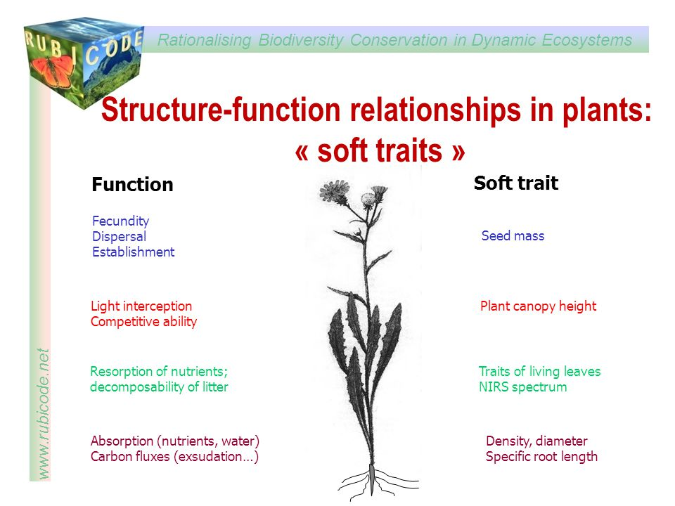 Structure-function relationships in plants: « soft traits »