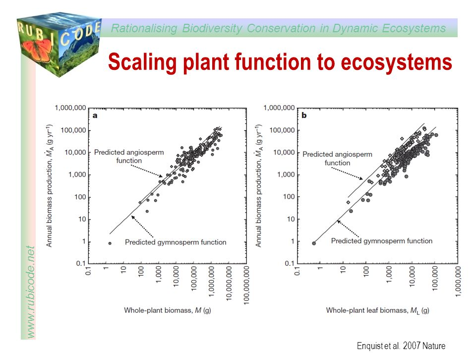 Scaling plant function to ecosystems