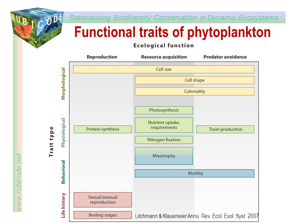 Functional traits of phytoplankton