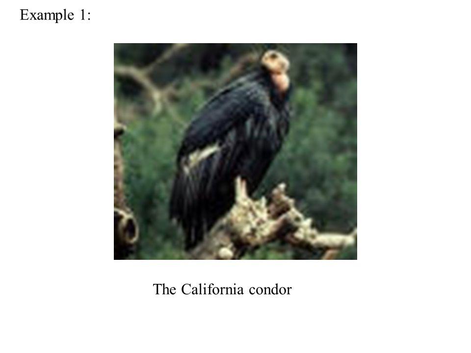 Example 1: The California condor