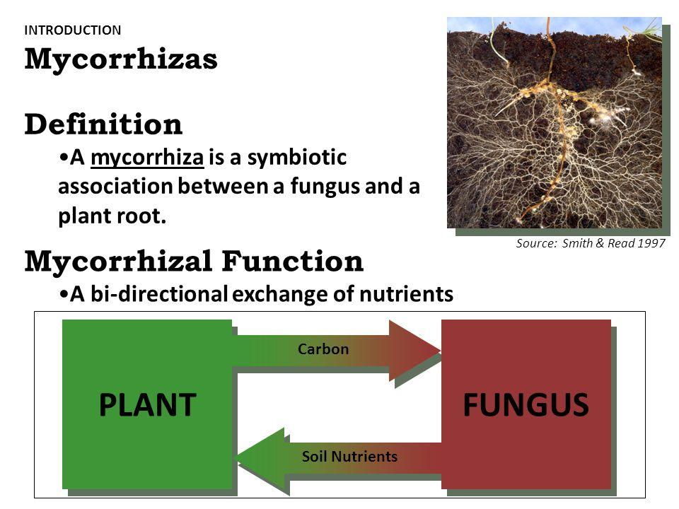 PLANT FUNGUS Mycorrhizas Definition Mycorrhizal Function