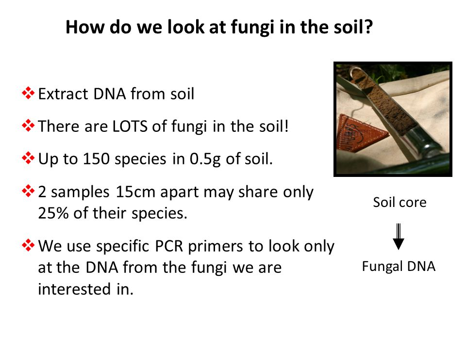 How do we look at fungi in the soil
