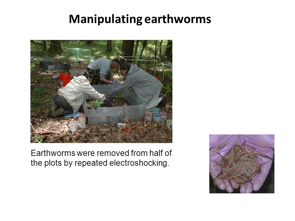 Manipulating earthworms