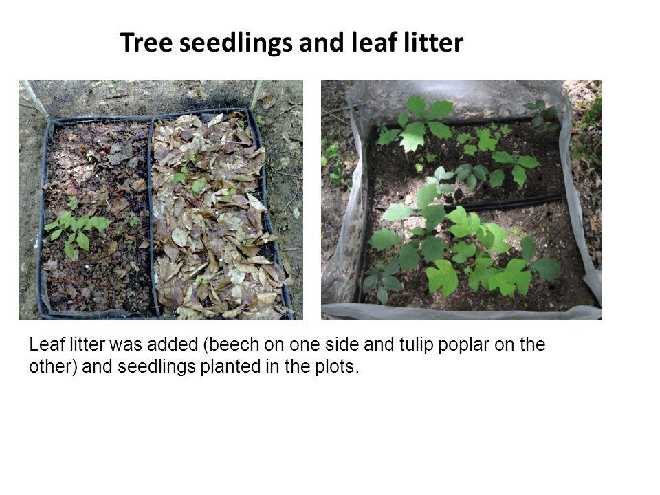 Tree seedlings and leaf litter