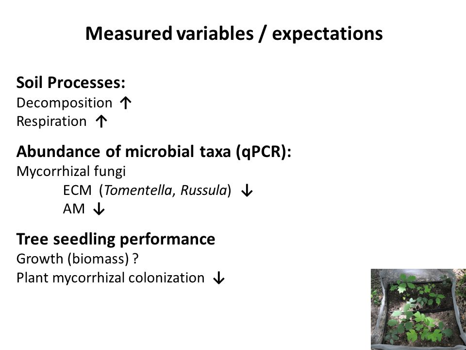 Measured variables / expectations
