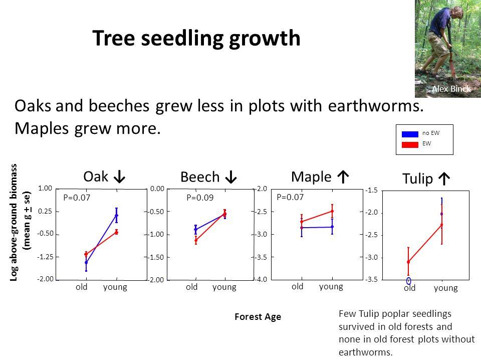Log above-ground biomass