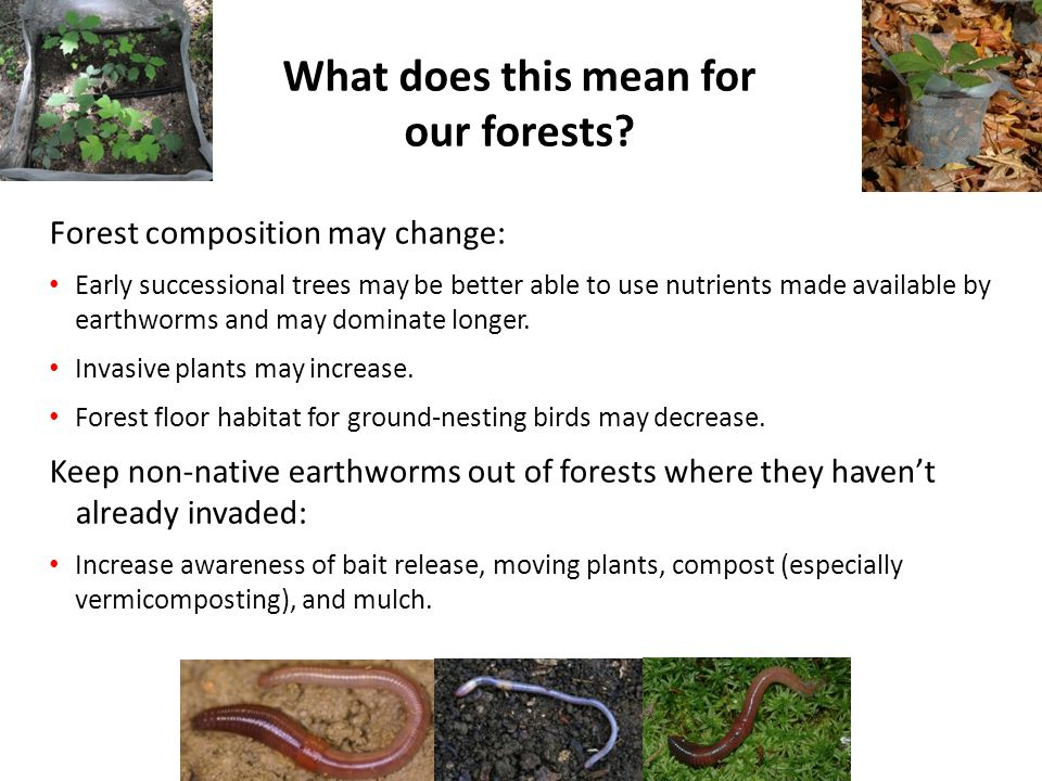 What does this mean for our forests