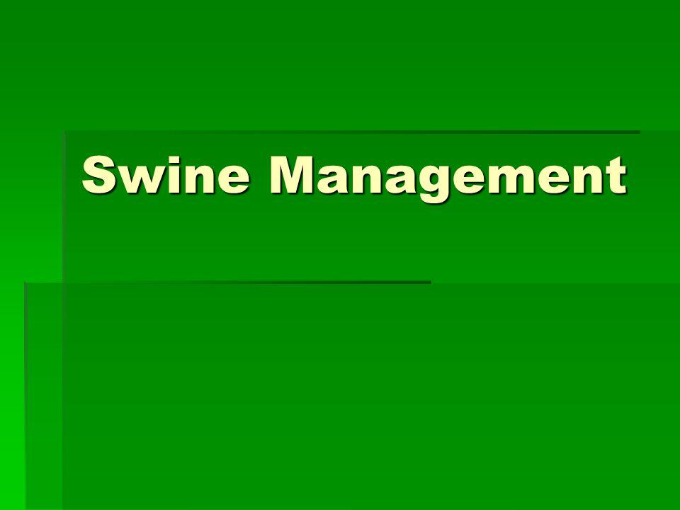 Swine Management