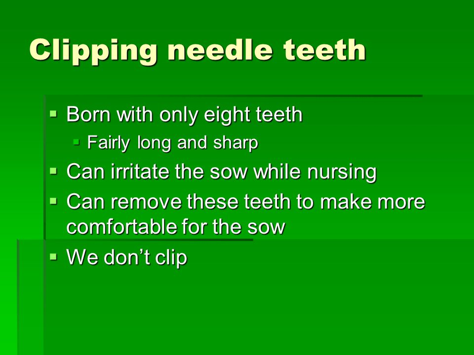 Clipping needle teeth Born with only eight teeth