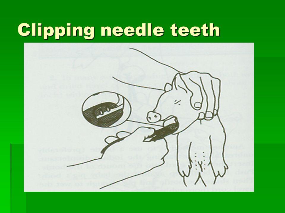 Clipping needle teeth