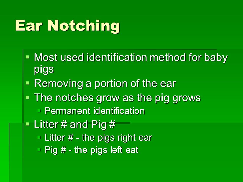 Ear Notching Most used identification method for baby pigs