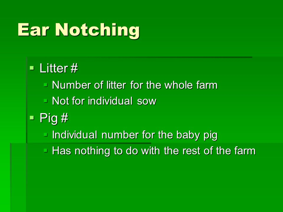 Ear Notching Litter # Pig # Number of litter for the whole farm