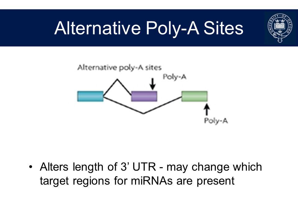 Alternative Poly-A Sites