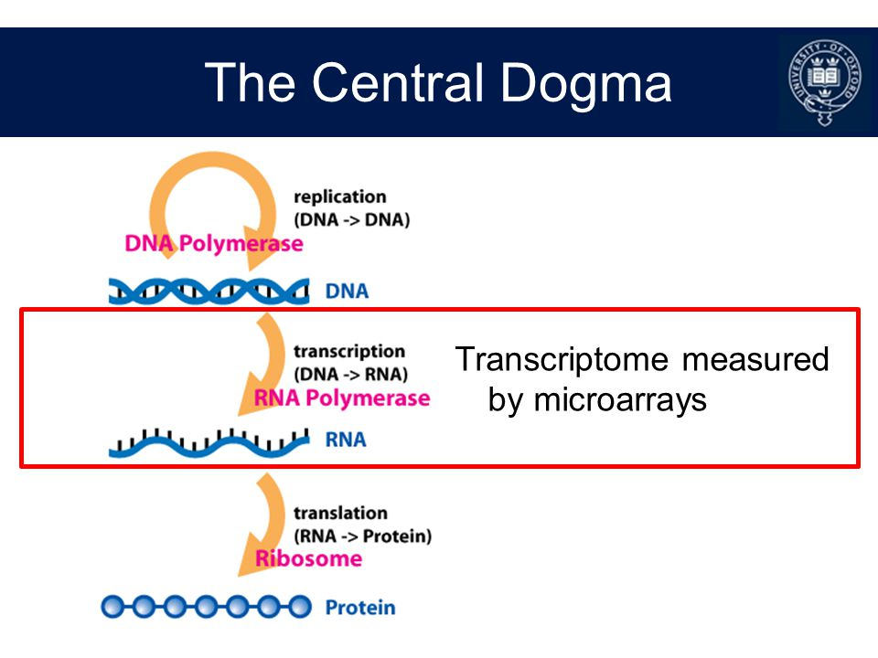The Central Dogma Transcriptome measured by microarrays