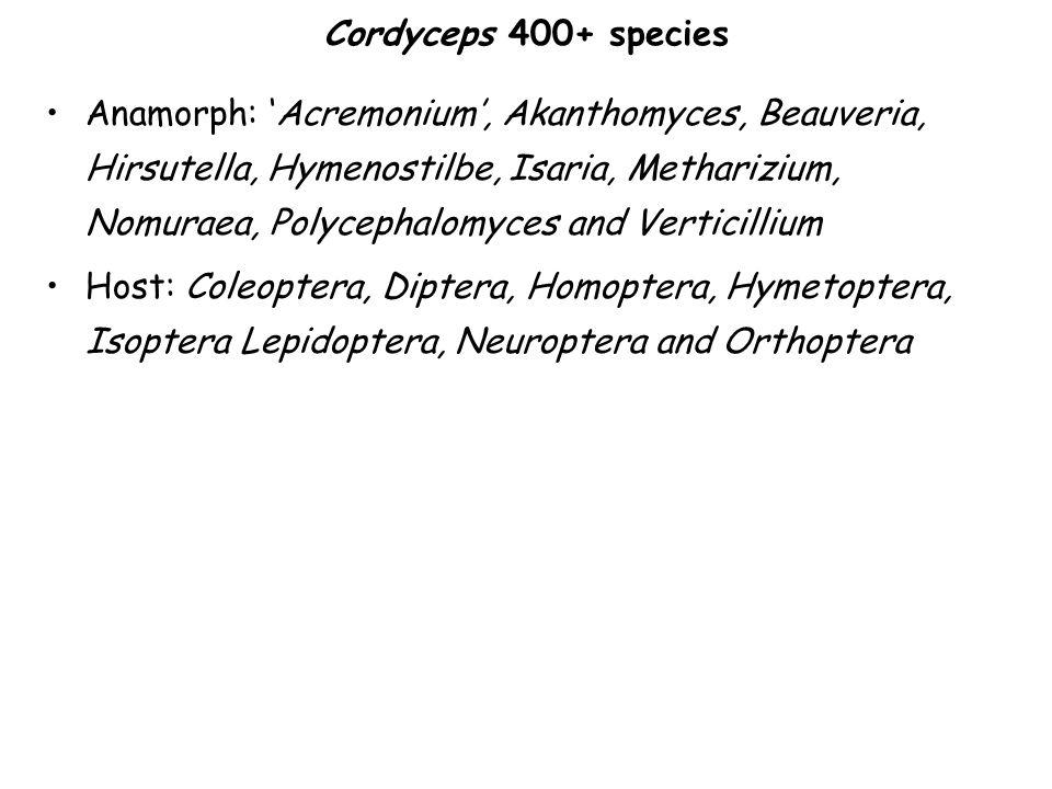 Cordyceps 400+ species