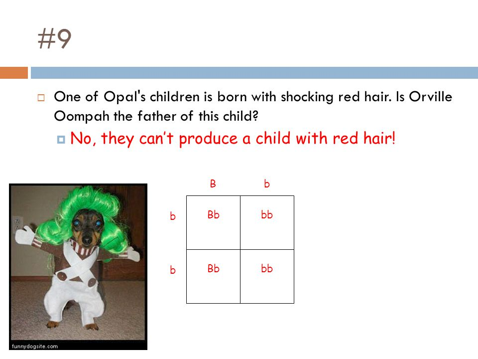 #9 One of Opal s children is born with shocking red hair. Is Orville Oompah the father of this child