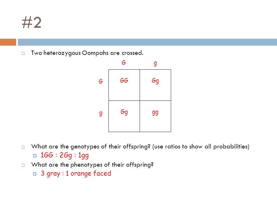 #2 Two heterozygous Oompahs are crossed.