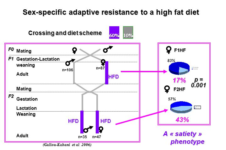 Sex-specific adaptive resistance to a high fat diet
