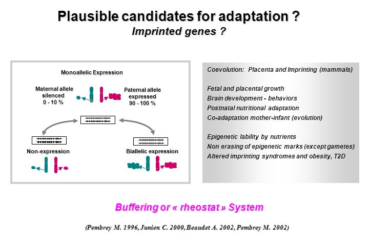 Plausible candidates for adaptation Buffering or « rheostat » System