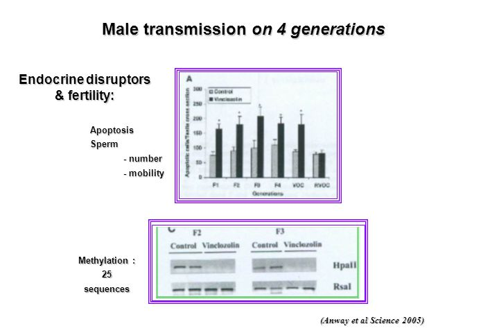 Male transmission on 4 generations