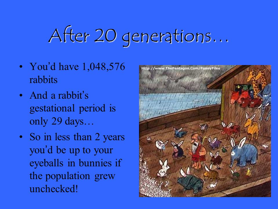 After 20 generations… You'd have 1,048,576 rabbits